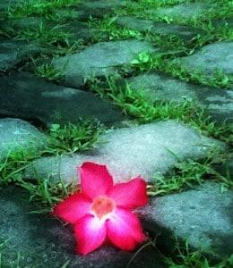 bunga-di-tepi-jalan2