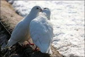 animal-kisses-4