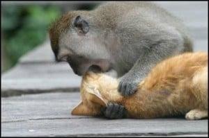 monyetgrayak-kiss-jpeg